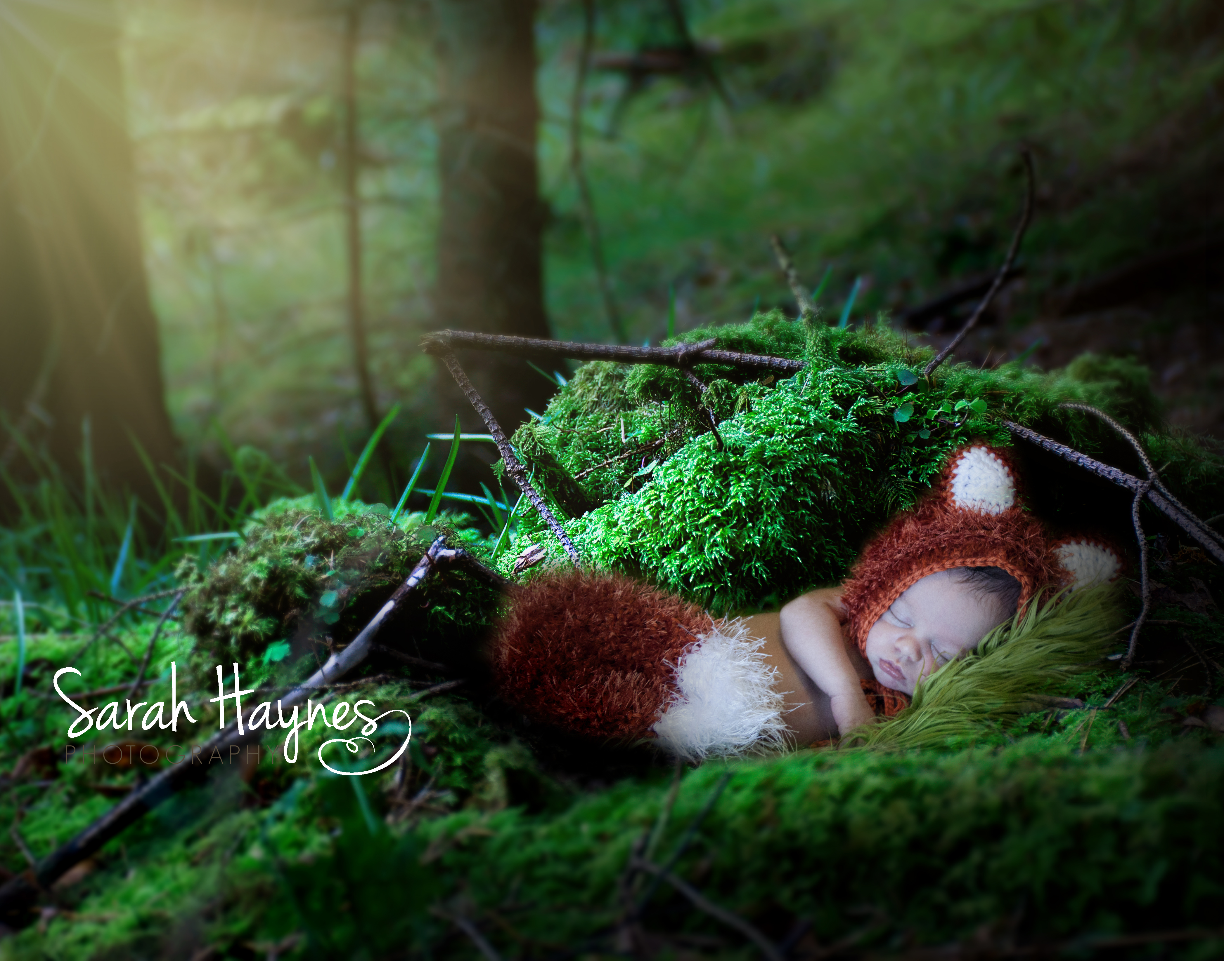 Bennett Woodland Fox_3Social